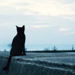 自宅でできるペット供養と失敗しないペット霊園選び