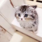 ペットの犬や猫が死んだら – 安置から火葬や供養までの流れ